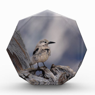 birdy love award