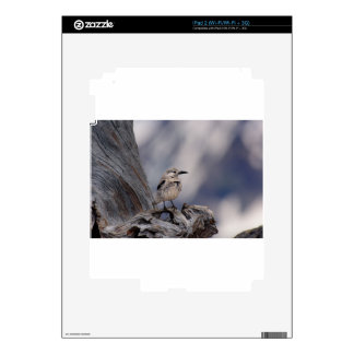 birdy love decal for the iPad 2