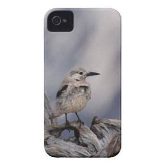 birdy love iPhone 4 case