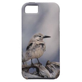 birdy love iPhone SE/5/5s case