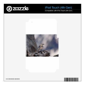 birdy love iPod touch 4G skin