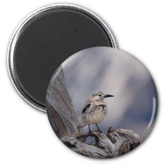 birdy love magnet