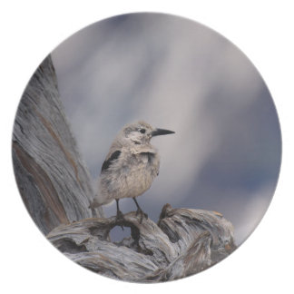 birdy love melamine plate