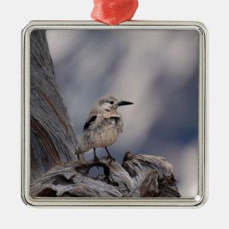 birdy love metal ornament