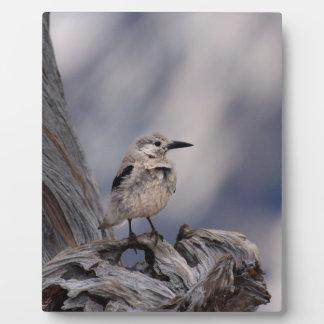 birdy love plaque