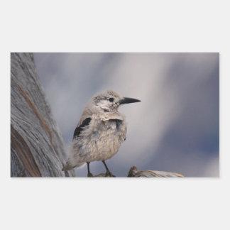 birdy love rectangular sticker