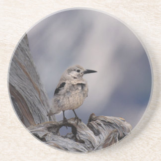 birdy love sandstone coaster