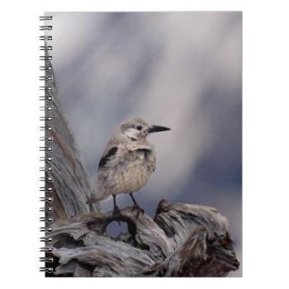 birdy love spiral notebook