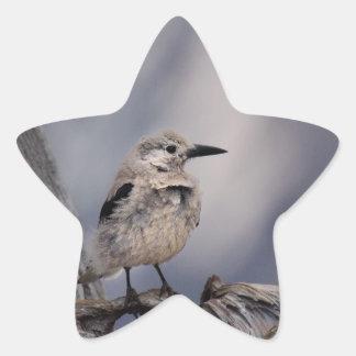 birdy love star sticker