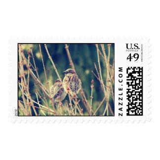 Birdy Sello Postal