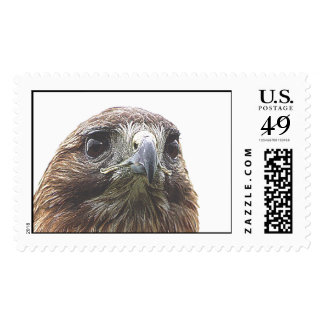 birdy timbres postales