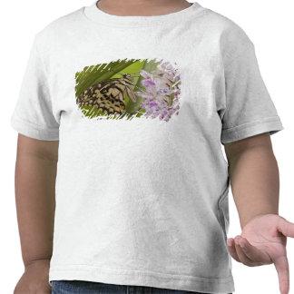 Birmania, Tachileik, abona buterfly Papilio con Camiseta