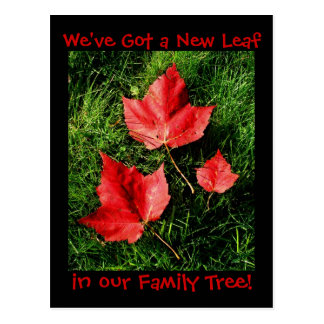 Birth Announcement - Autumn Leaves Postcard