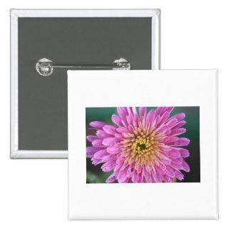 Birth Flower -November - Chrysanthemum Pinback Button