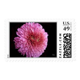 Birth Month Floral Postage November Chrysanthemum
