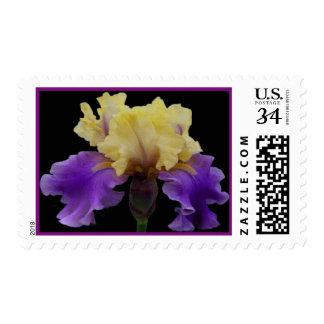 Birth Month Postage  February Iris