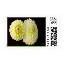 Birth Month September Aster Postage Stamps