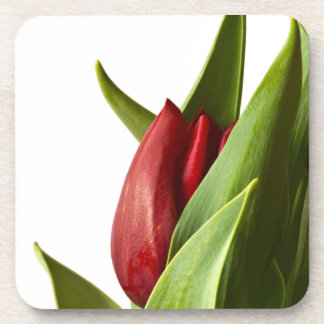 Birth of a Spring Red Tulip Coaster