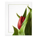 Birth of a Spring Red Tulip Photo Print