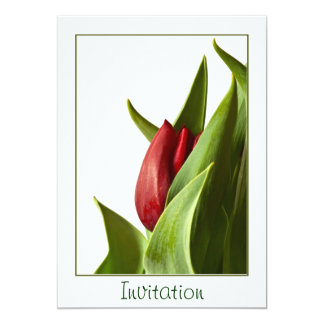 "Birth of a Spring Red Tulip - Template 5"" X 7"" Invitation Card"