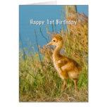 Birthday, 1st, Baby Sandhill Crane Greeting Card