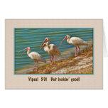 Birthday, 59th, Ibis Birds Cards
