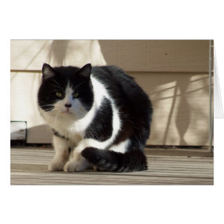Birthday, Black N White Cat Card