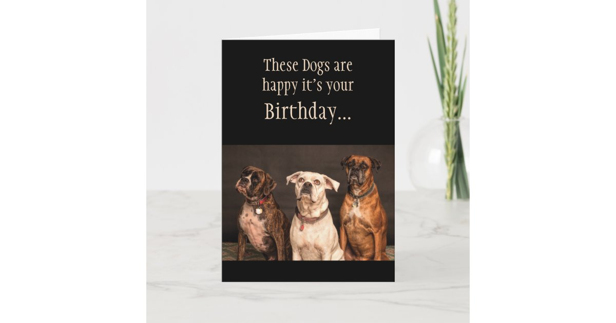 Birthday Cake Humor Hope You Trip Boxer Dogs Funny Card Zazzle