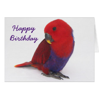 Birthday card an Eclectus parrot