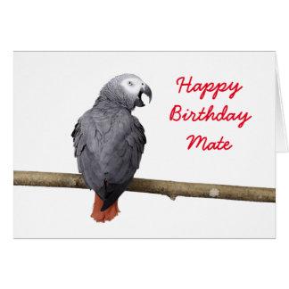 Birthday card Congo African Grey Gray parrot