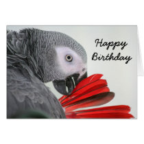 Birthday card  Congo African Grey Gray Parrot