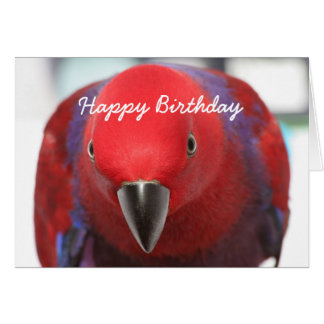 Birthday card Eclectus parrot