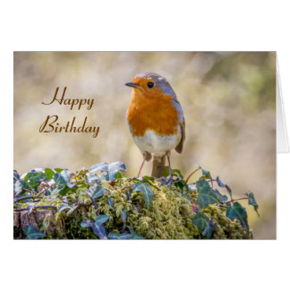 Birthday card european robin Erithacus rubecula