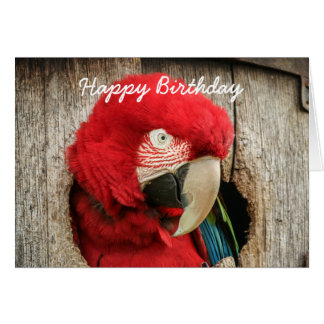 Birthday card Green Wing macaw red parrot