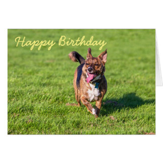 Birthday card happy dog trotting on grass