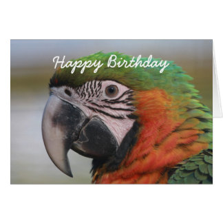 Birthday card Harlequin Macaw parrot