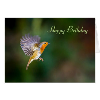 Birthday card hovering robin Erithacus rubecula