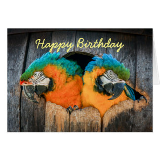 Birthday card Macaw parrots in barrel