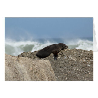 Birthday Card NZ Fur Seal on the rocks chilling