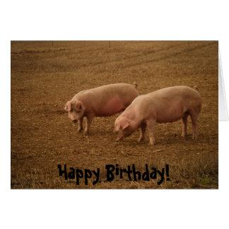 Birthday Card - Pigs