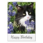 Birthday Card Tuxedo Cat in Texas Bluebonnets