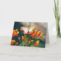 Birthday Card - White Peacock Butterflies