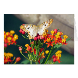 Birthday Card - White Peacock Butterflies
