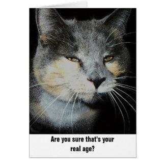 Birthday cat humor greeting card