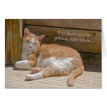 Birthday Cat Nap Greeting Card
