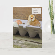 Birthday Chick for Dad Card
