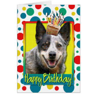 Birthday Cupcake - Australian Cattle Dog Card