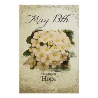 """Birthday flowers on May 13th """"Hawthorn"""" Poster"""