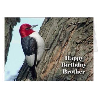 Birthday for Brother, Red-headed Woodpecker Card