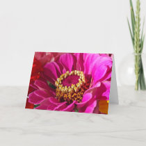 Birthday for Mom, Pink Zinnia Flower Card